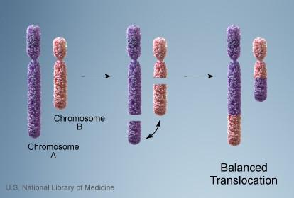 balancedtranslocation