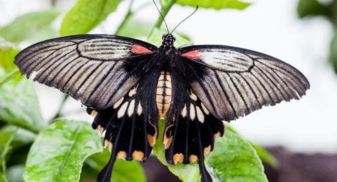 swallowtail-2014exhibition_129641_1 - Copy