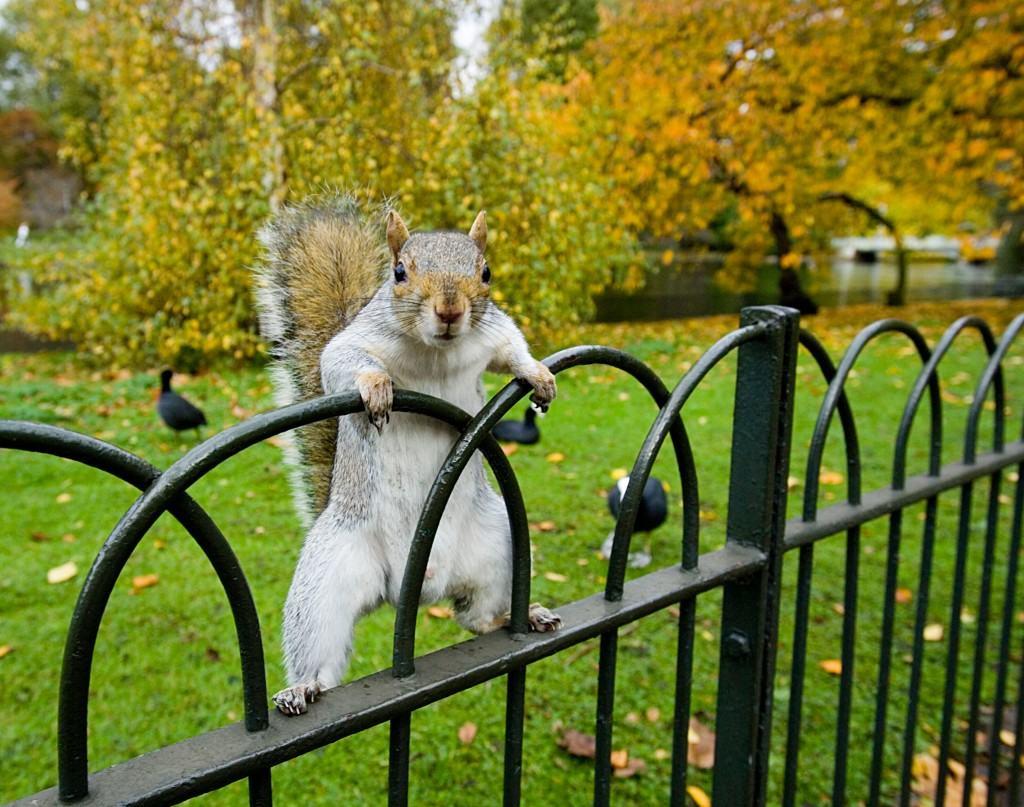 Squirrel Appreciation Day.