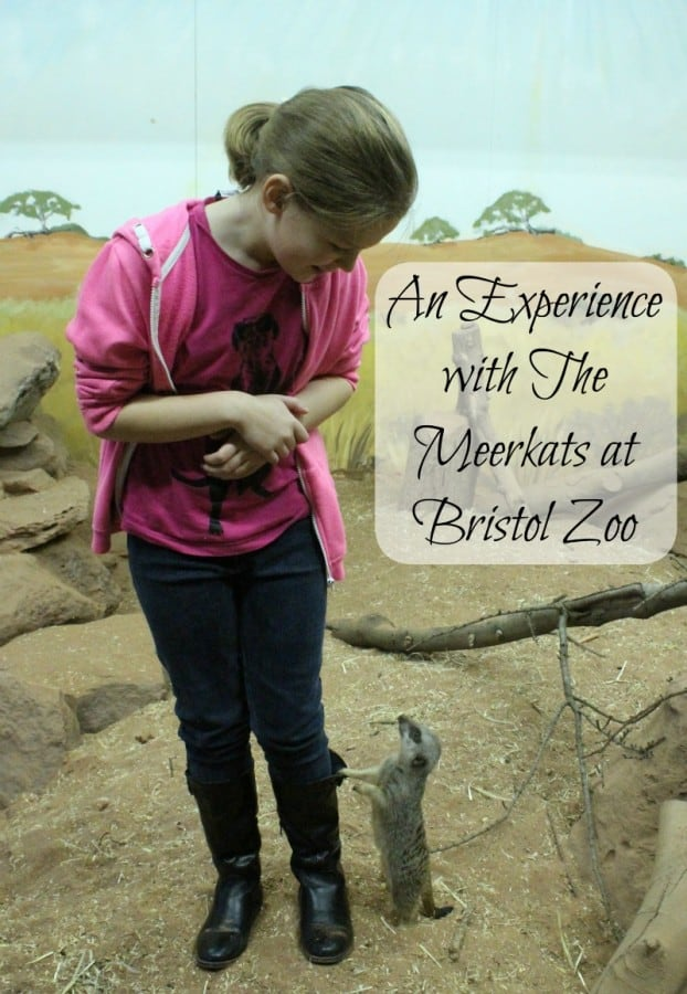 An Experience with The Meerkats at Bristol Zoo, thanks to Blacklane