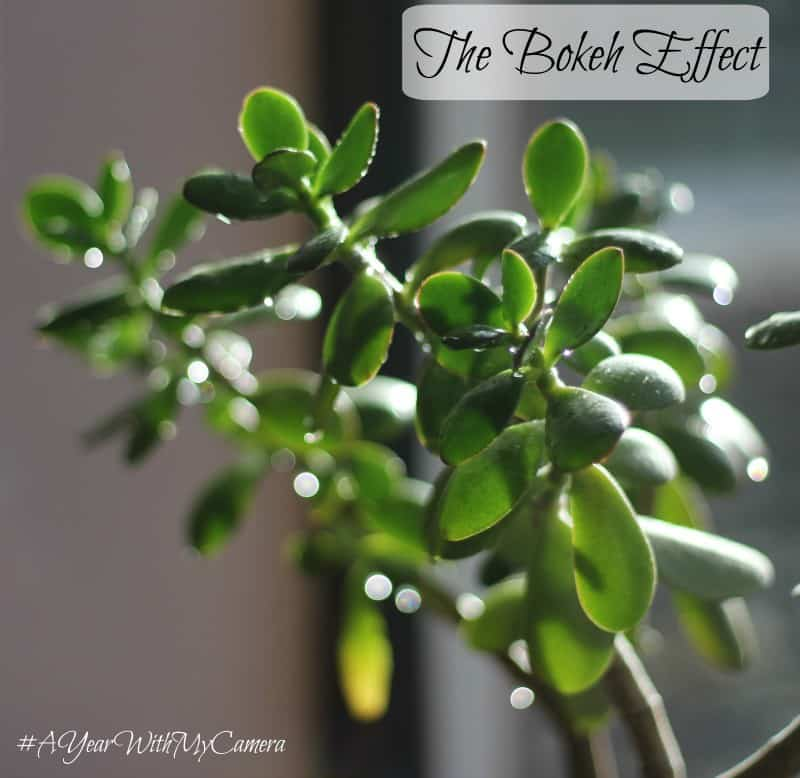 The Bokeh Effect #AYearWithMyCamera