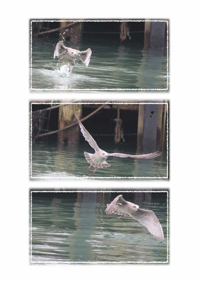 A Seagull Triptych