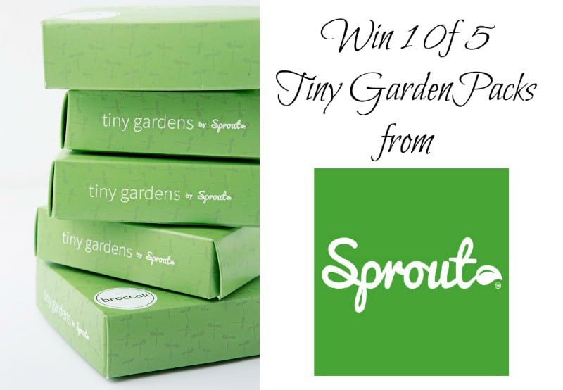 Valentines Day Goes Eco-Friendly with Sprout plus WIN 1 of 5 Tiny Desk Gardens