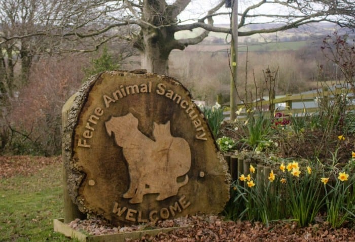 A Good Friday Visit to Ferne Animal Sanctuary