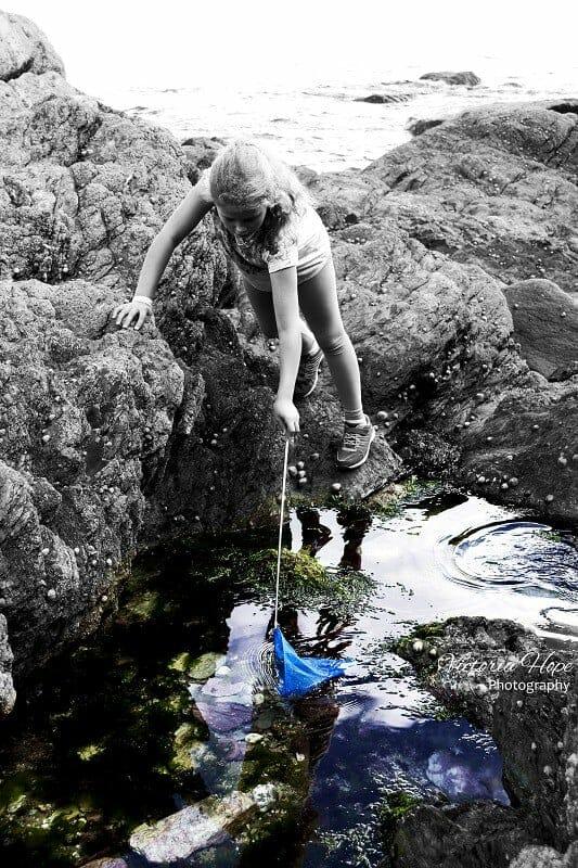Adventures in Rock Pooling