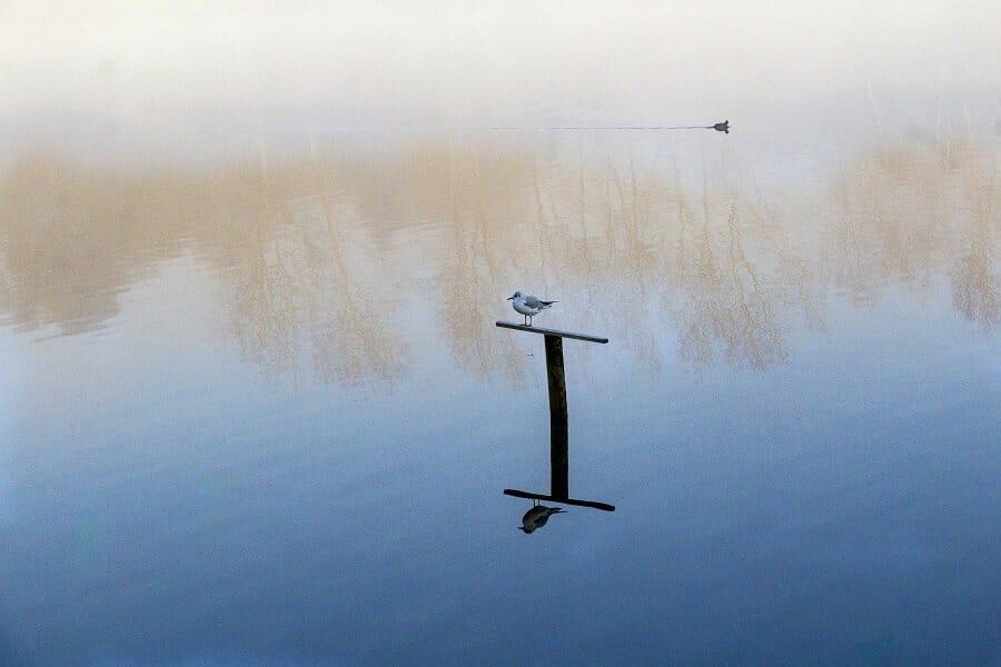 A Misty Chard Reservoir