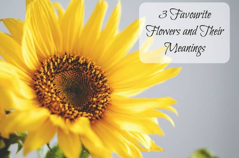 3 Favourite Flowers and Their Meanings