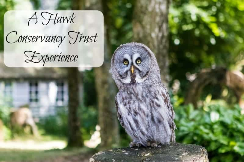 A Hawk Conservancy Experience